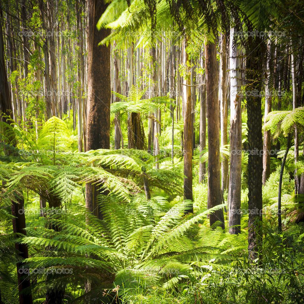 Foresta di felci foto stock thpstock 44716141 for Piani torreggianti