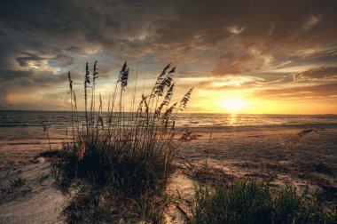 Grassy and beach sunset