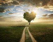 Fotografia albero amorepercorso natura sabbia