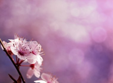 Pink spring background