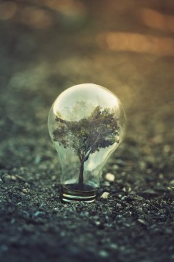 Light bulb and the power and nature