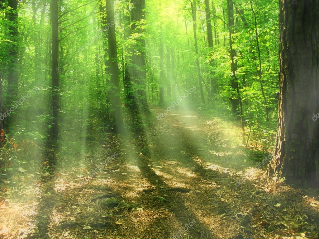 Light rays into the forest