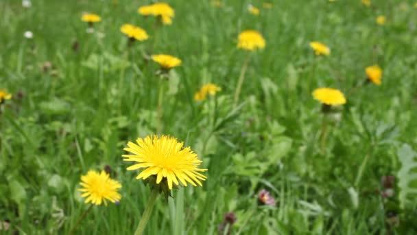 divoké květiny na louce