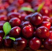 Fotografie Fresh red cranberries