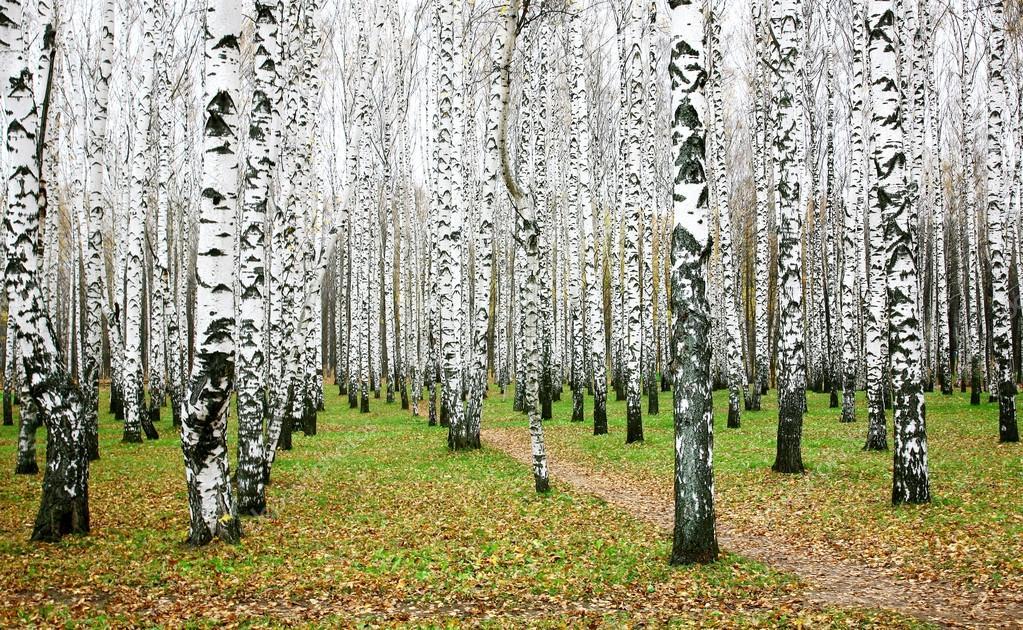 October autumn birch grove
