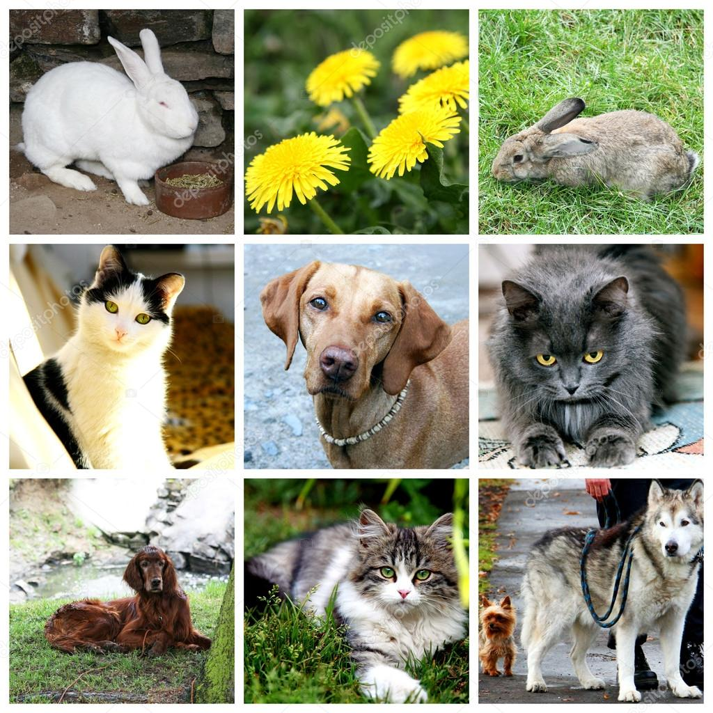 Collage of animals - cat, dog, rabbit