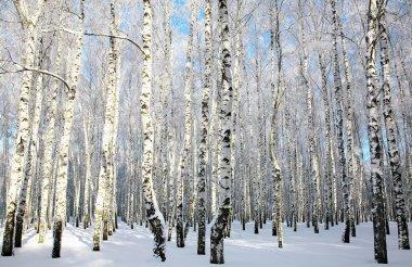 Snowy winter forest in sunlight