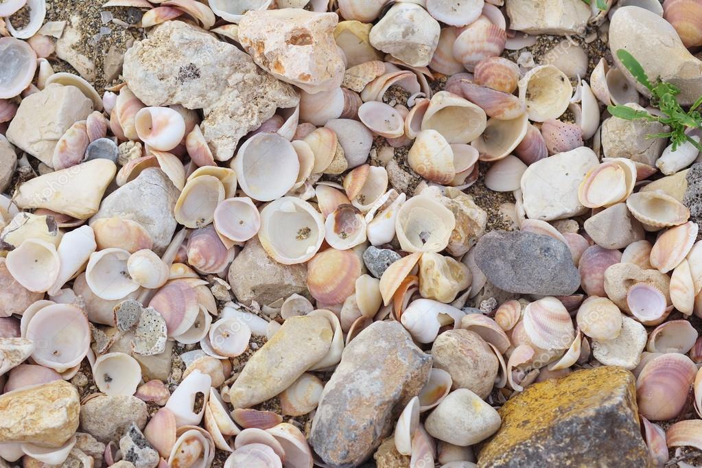 бывает ракушки средиземного моря названия и фото кусты искусственных водоемов