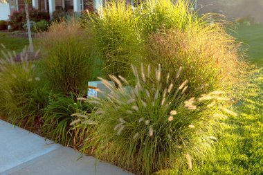 Hiding Underground Power Line Boxes with Giant Ornamental Grasses