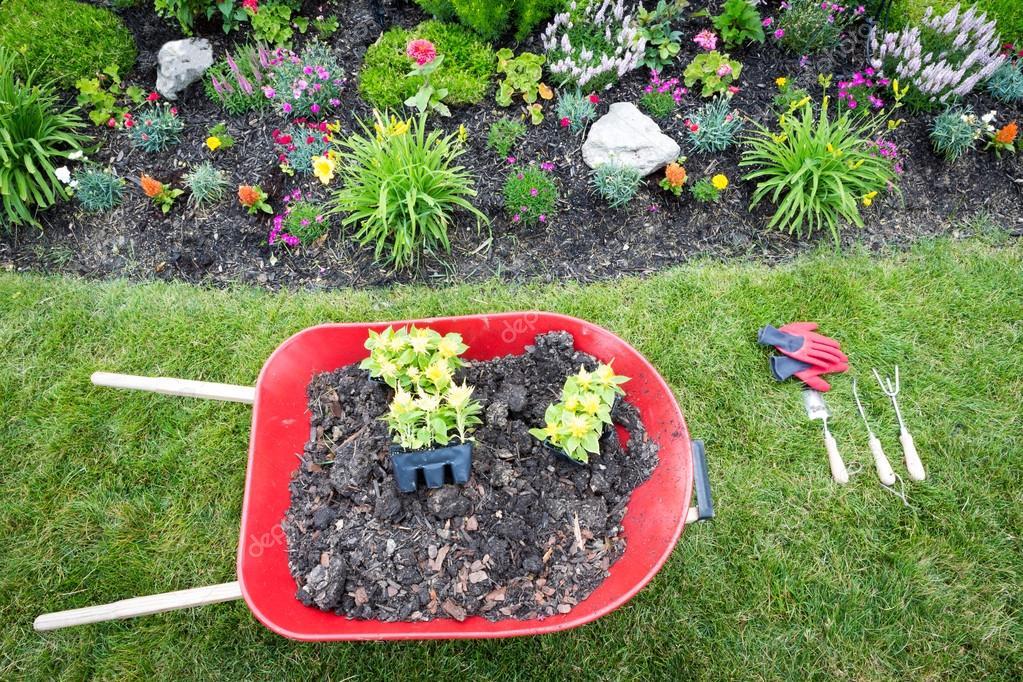 Planting a celosia flower garden in spring — Stock Photo © oocoskun ...