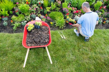 Gardener landscaping a garden