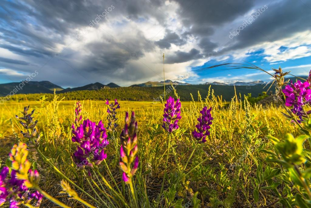 Indian Paintbrush flowers Colorado Landscape