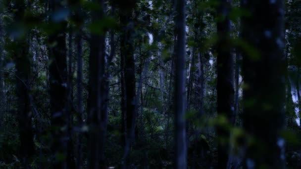 Misztikus lény viselt egy hosszú köpenyt, a sötét erdőben