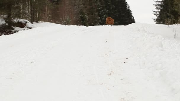 Spielzeugbär reitet den Hügel hinunter