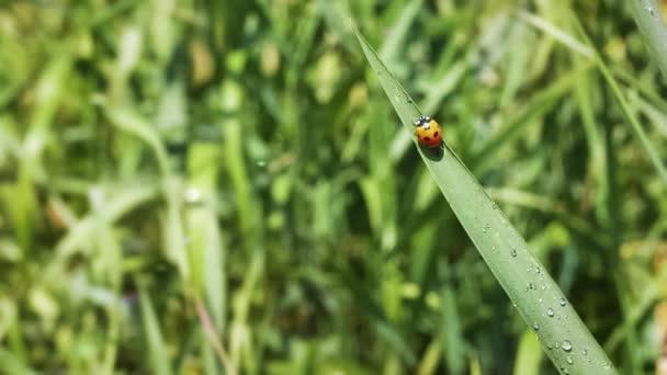 A grass levelei Katica