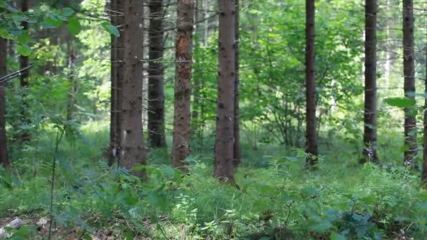 Férfi optikai fegyver és a távcső woods epizód 7