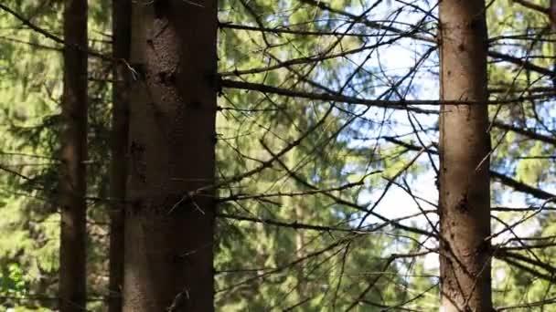 Férfi optikai puska az erdőben epizód 9