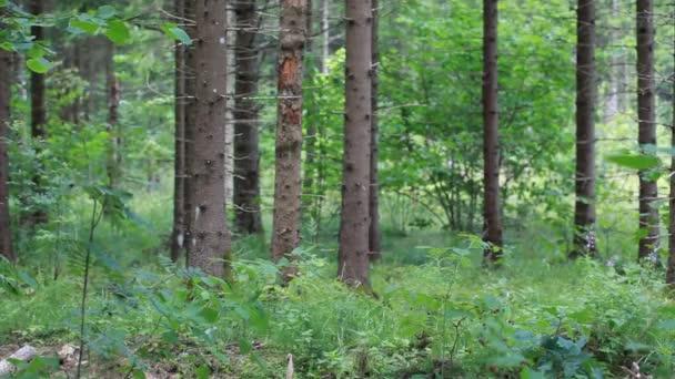 Férfi optikai fegyver és a távcső woods epizód 8