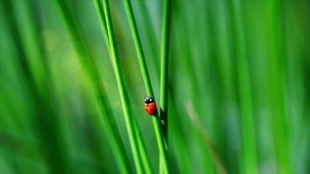 Ladybird on grass episode 2