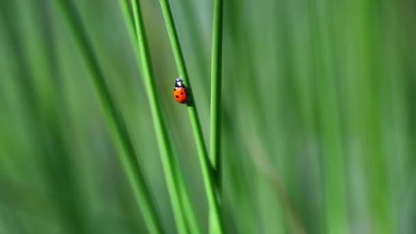 Beruška na trávě Epizoda 3