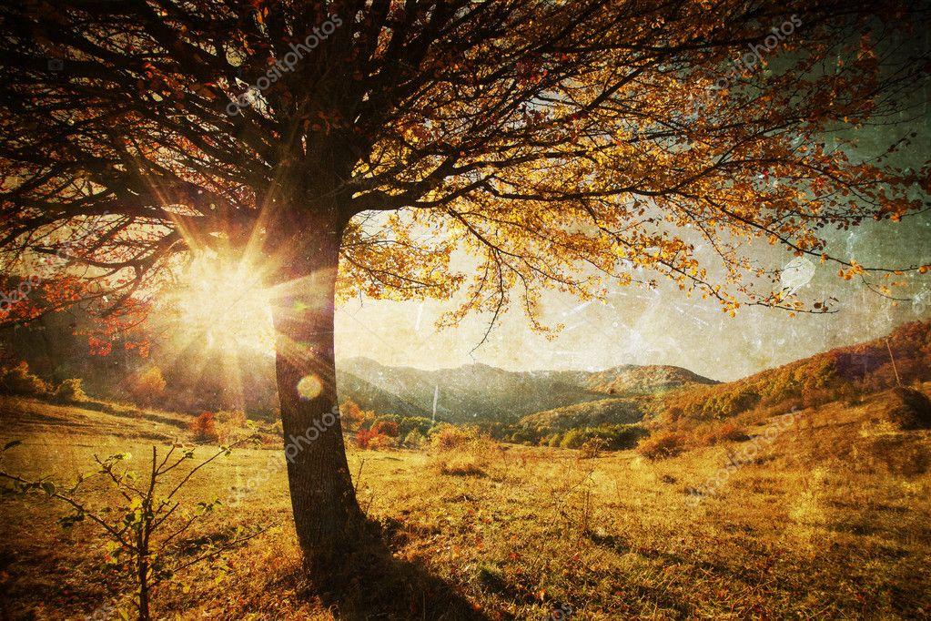 Lonely beautiful autumn tree - vintage photo
