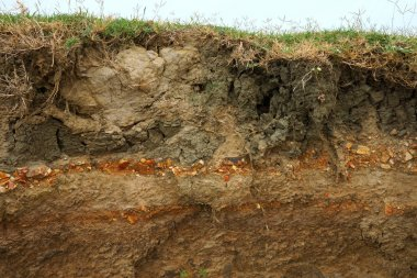 cut of soil with different layers at the Freshwater lake., Thail