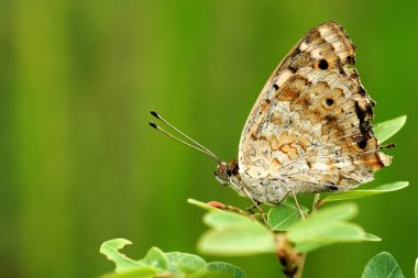 Butterfly on green leaves.