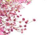 Fotografie Pink trumpet tree flower blooming