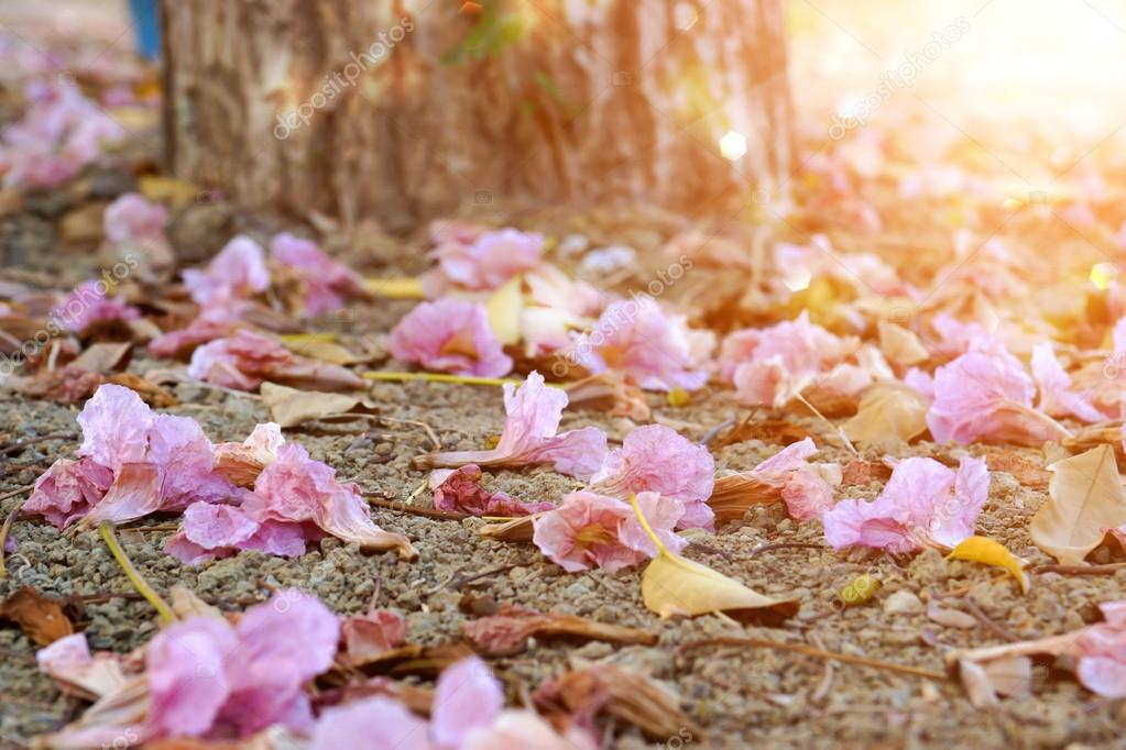 Pink trumpet flowers and dry leaves in the summer.