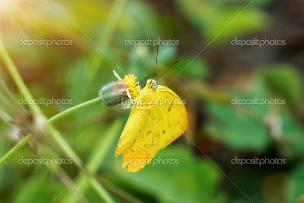 Schmetterlinge Sind Auf Gras Futtern Stockfoto C Noppharat Th