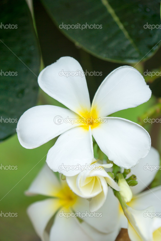 White flowers are fragrant relaxing.