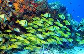 Fényképek iskola az hal