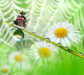 Fotografie Dew and butterfly