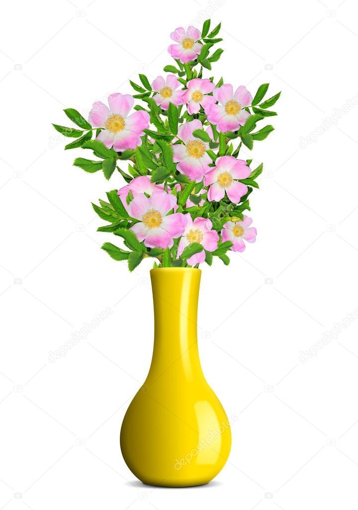 Dog Rose In The Yellow Vase Stock Photo Vencav 16311231