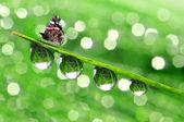 Fotografie Tau und Schmetterling