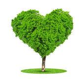 Fotografia albero nel cuore forma