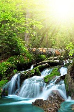 Waterfall in National park Sumava Czech Republic Europe stock vector