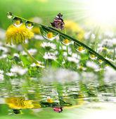 Fotografie Kapky rosy a motýl