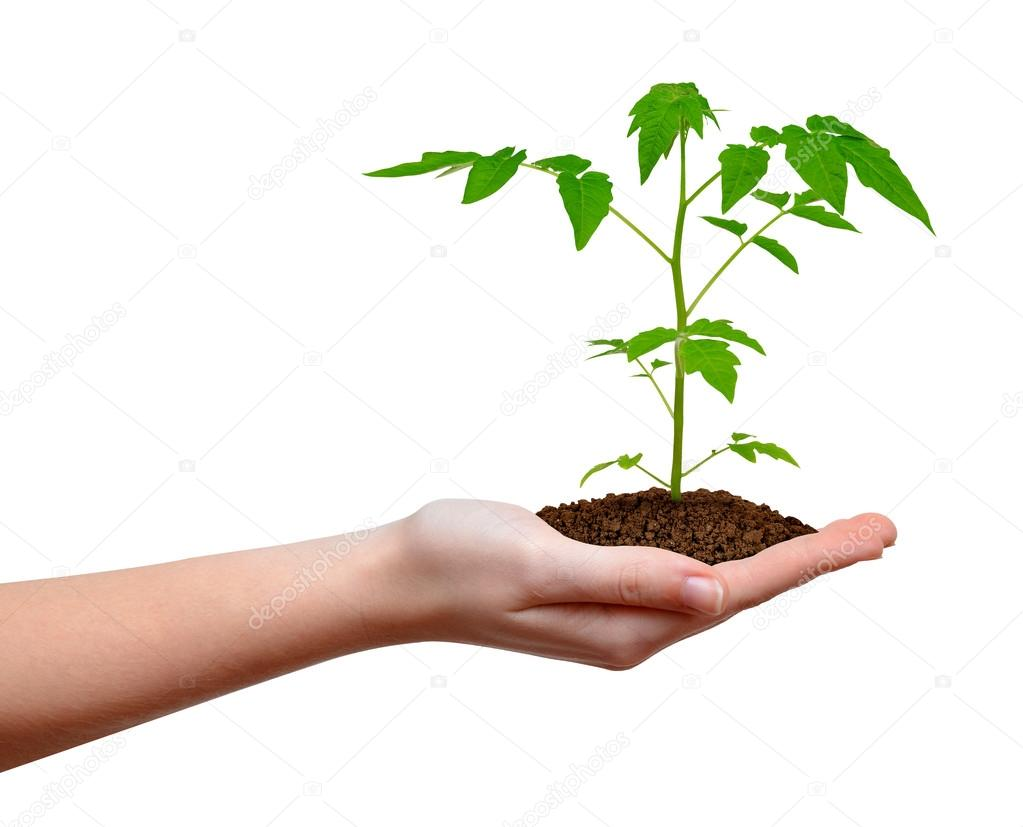Growing plant in hand