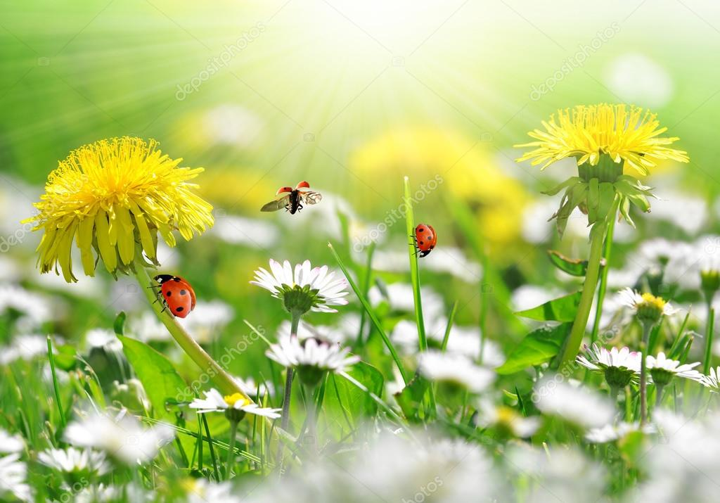 Dandelions and daisy