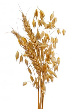 Oats and wheat