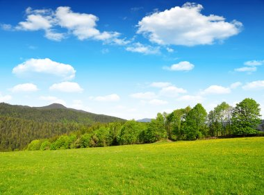 Spring landscape in Bavarian Forest