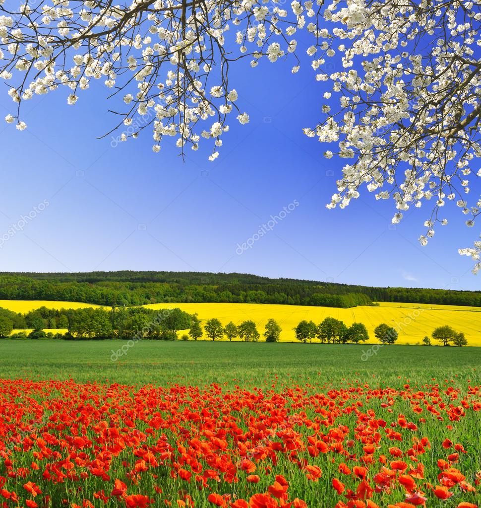 Фотообои Весенний пейзаж