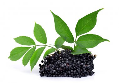Elderberry ( Sambucus nigra ) isolated