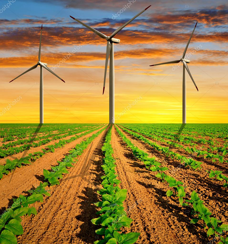 Wind turbines on field with green sunflowers