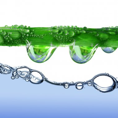 Fresh grass with dew drops above the water level stock vector