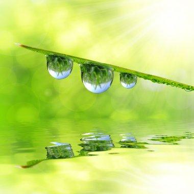 Dew drops close up stock vector