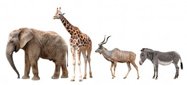 Giraffe, Kudu, Zebra and Elephant