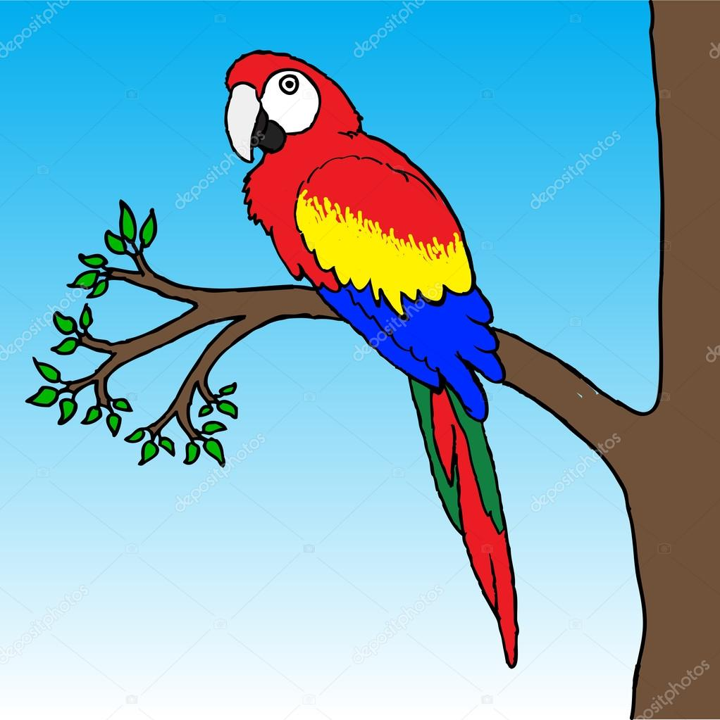 Dukepope: Amerika Papağanı Papağan Illüstrasyon
