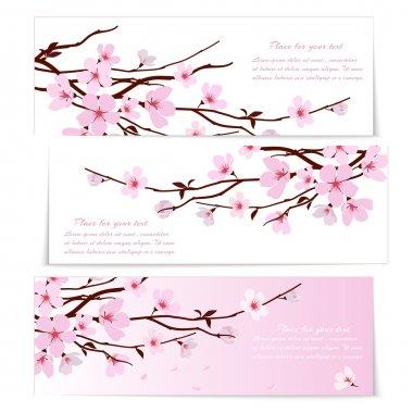 Three banners with Sakura flowers
